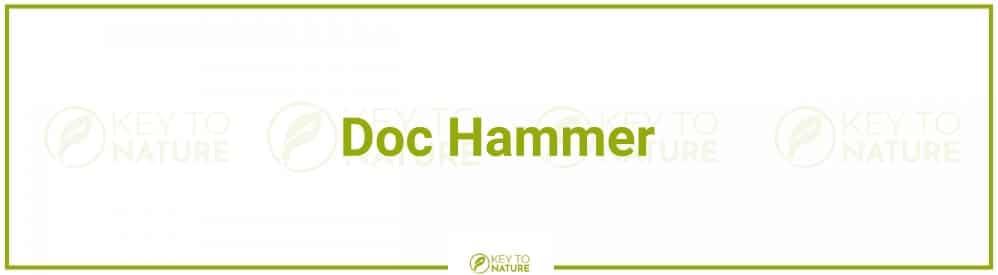 Doc HammerPop-Master – deutsches Potenzmittel geprüft