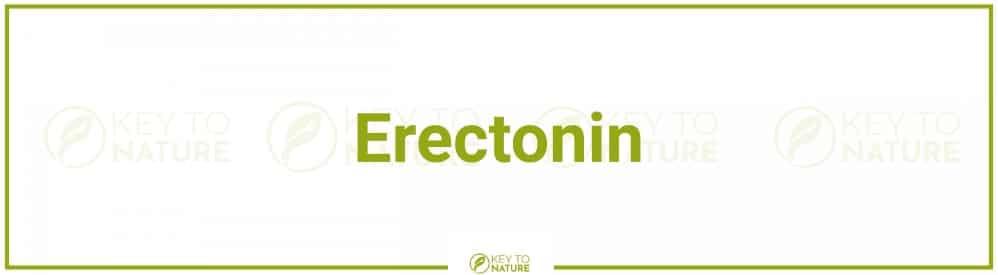 Erectonin – das Mittel für bessere und längere Erektionen?